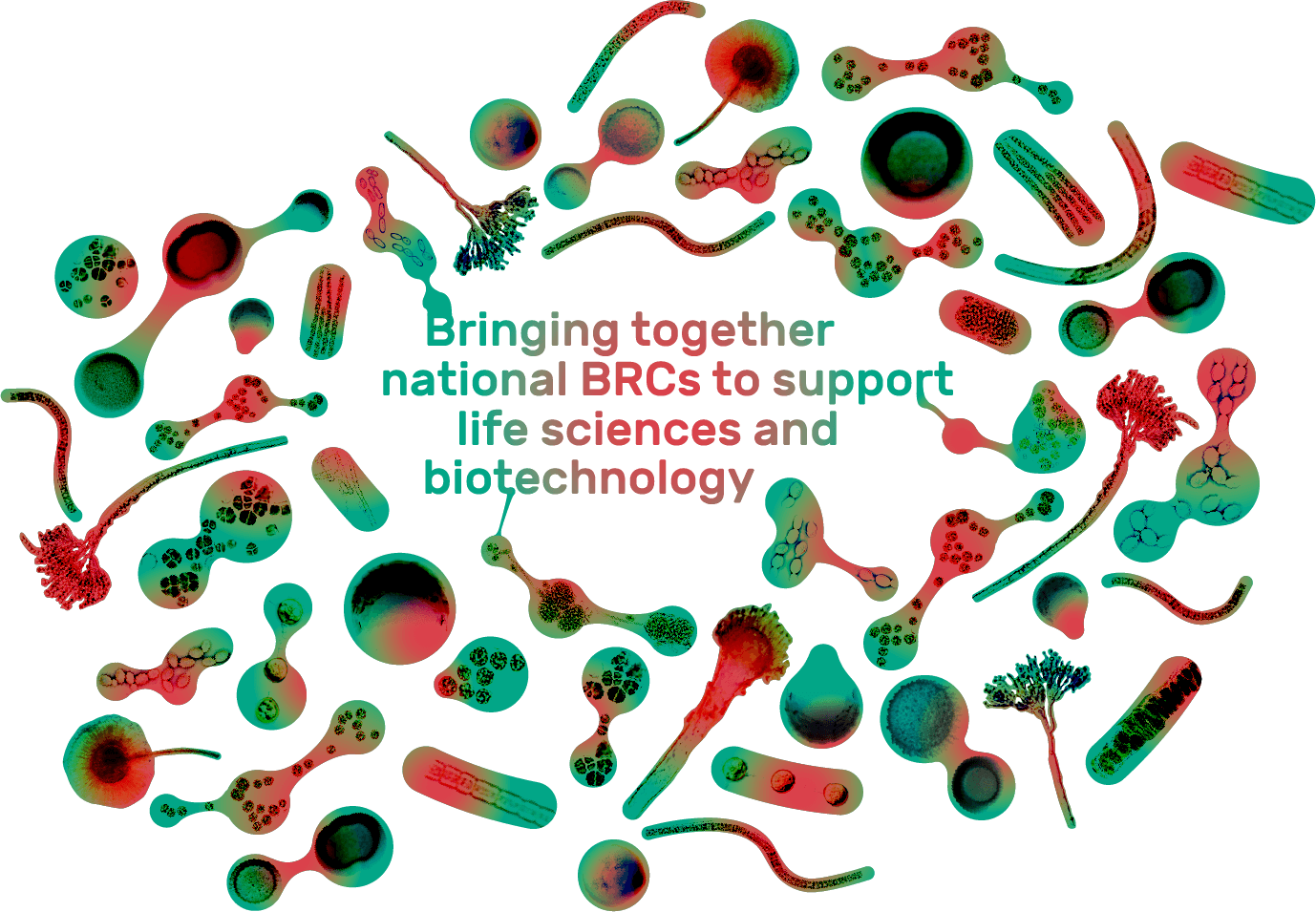 Bringing together national BRCs to support life sciences and biotechnology